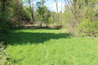 Meadow with drainage bund beyond (E Beck)