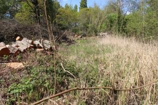 Old pond (E Beck)